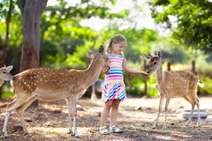 Child feeding wild deer at zoo. Kids feed animals. Child feeding wild deer at petting zoo. Kids feed animals at outdoor safari park. Little girl watching royalty free stock photography