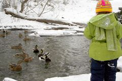 The child feeds ducks. With bread on the river in the winter Royalty Free Stock Images