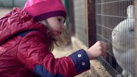 Child feeds white rabbit grass Royalty Free Stock Photo