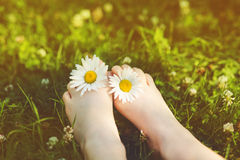 Child feet with daisy flower on green grass in a summer park. In Royalty Free Stock Photography