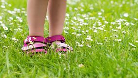 Child feet in grass with daises in spring Stock Image