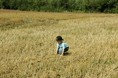 Child  in the field. Royalty Free Stock Photography
