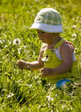 Child picking flowers in field Royalty Free Stock Photos