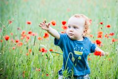 child in a field of poppies royalty free stock photography