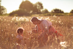 Child in a field of wheat Royalty Free Stock Photography