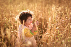 Child in a field of wheat Royalty Free Stock Image