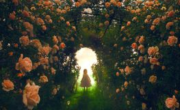 Child finding a rose garden. A little girl finds a beautiful rose garden Royalty Free Stock Photo