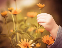 Child and flower Royalty Free Stock Photography
