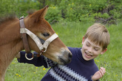 Child and the foal. Boy and foal play together on to the meadow Royalty Free Stock Images