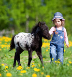 Child and foal in filed. Small girl with foal in the meadow at spring Royalty Free Stock Image