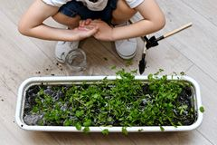The child folded his hands after gardening. royalty free stock images