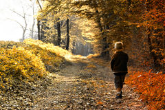 Child in forest Royalty Free Stock Photos