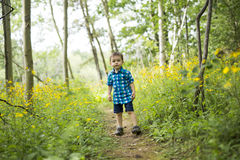 Child in the forest having fun. A child in the forest having fun Royalty Free Stock Images