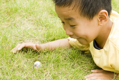 A child found two eggs Stock Image
