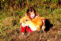 Child and Fox camouflaging. Little girls bonds with fox in a fall meadow Stock Photography