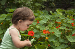 Child in the garden. Little girl (profile shot) in a green top holding a red flower in a garden Royalty Free Stock Photo