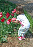 Child in a Garden. A young child enjoys the tulips in a garden Royalty Free Stock Photo