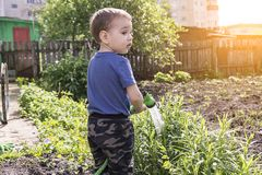 Child in the garden watering flowers stock photos