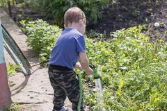 Child in the garden watering flowers stock photography