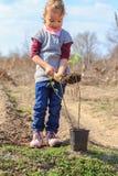 Child gardening Stock Image