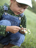Child gathers flowers Royalty Free Stock Photos
