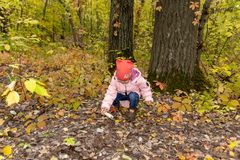 Child gathers mushrooms in the forest stock images