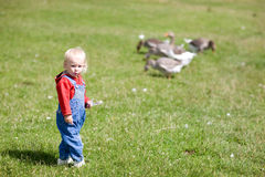 Child and geese Stock Photo