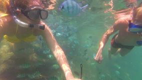 Child and girl bathe in the sea with fish. Scuba Diving in Masks. Child and girl swim in the sea with fish. Snorkelling stock video footage