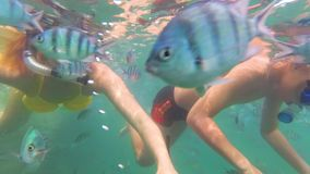 Child and girl bathe in the sea with fish. Scuba diving in masks. Child and girl swim in the sea with fish. Snorkelling stock video