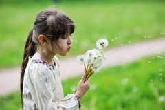 Child girl blowing dandelions Stock Images