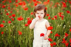 Child girl with bouquet of poppies stock images