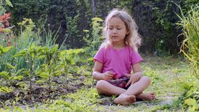 Child girl is eating strawberries sitting on the grass on the farm. stock video footage