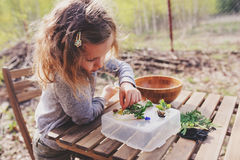 Child girl exploring nature in early spring forest. Kids learning to love nature. Teaching children about seasons changing. Warm weather Royalty Free Stock Photos