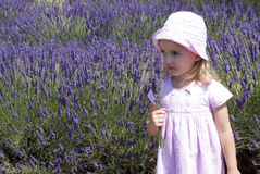 Child girl in floral field of lavender Stock Images