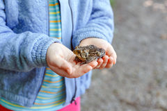 Child girl holding small forest frog toad. Closeup of Caucasian kid child hands holding small green brown forest frog, outside on summer autumn day Royalty Free Stock Photography