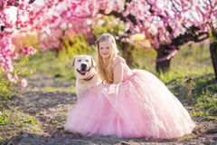 Child girl with labrador dog in blooming garden Royalty Free Stock Photography