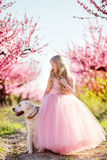 Child girl with labrador dog in blooming garden Royalty Free Stock Photo