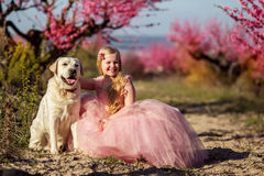 Child girl with labrador dog in blooming garden Stock Photography