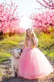 Child girl with labrador dog in blooming garden Stock Photos