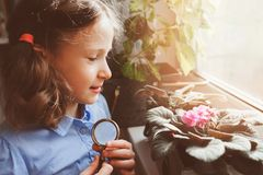 Child girl learning to grow potted plants at home, Kid exploring home flowers  with loupe. Nature care and ecology concept Stock Photo