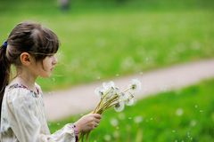 Child girl looking at dandelion seeds Stock Photos