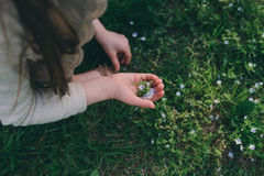 Child girl picking forget-me-not flowers in spring or summer garden. Focus on hand Royalty Free Stock Photography
