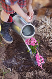 Child girl in plaid dress watering pink hyacinth flowers in spring garden Royalty Free Stock Photography