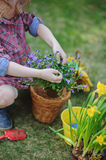 Child girl planting bluebells and narcissus in spring garden Stock Images