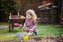 Child girl planting hyacinth flowers in spring garden. Cute curly child girl in plaid dress planting hyacinth flowers in spring garden with wheelbarrow on Royalty Free Stock Image