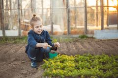 The child girl plants seedlings. Gardening agriculture royalty free stock photo