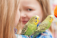 Child girl playing with budgies Stock Photo