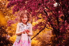 Child girl playing with flowers near blooming crab apple tree in spring Stock Image