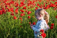 Child girl in poppy field Stock Photos