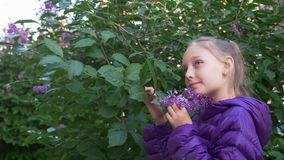 Child girl in purple jacket sniffes lilac flowers on the bush. stock footage